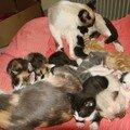 2008 04 15 Papillon et Blanco et les 9 chatons