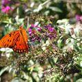 Butterfly (136)