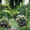 Roses arbre_13 22 06_5616