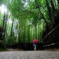 Dans les forêts de bambous...