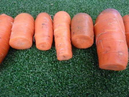 8-carottes (1)