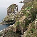 Cap Frehel - le rocher aux oiseaux