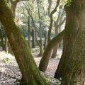 Le bois sacré du Val des Nymphes