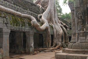 cambodge 3 103