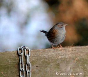 petit_oiseau
