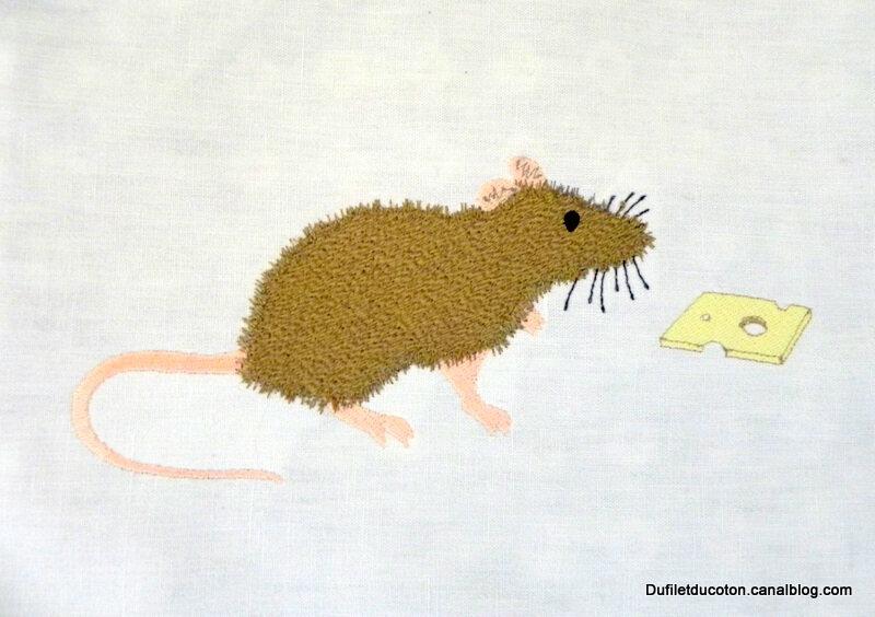 rat gruyère gros plan