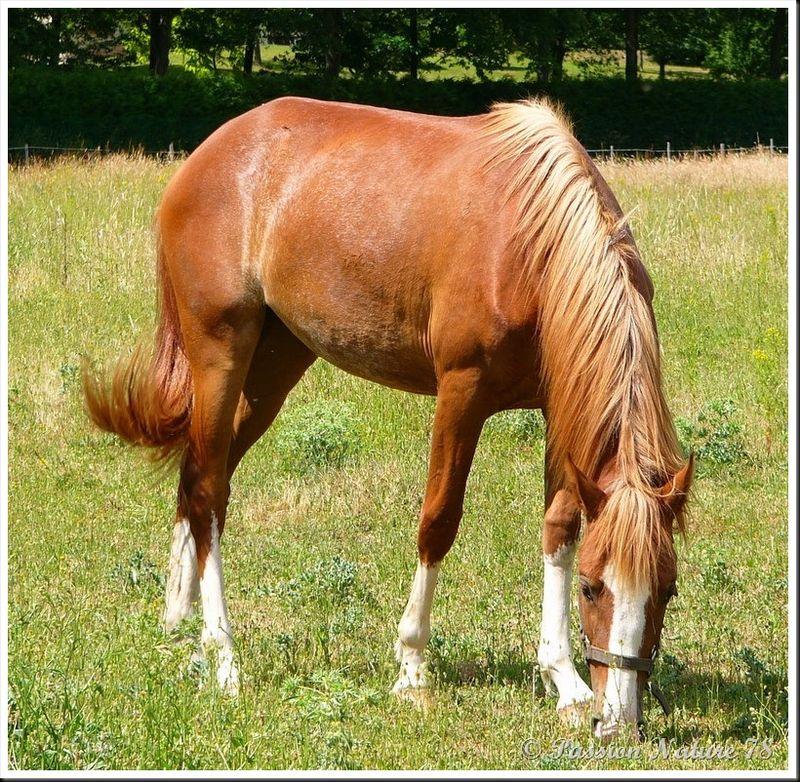 Le 78 département du cheval (2)