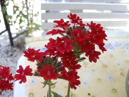 fleurs_014