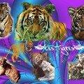 Les tigres!
