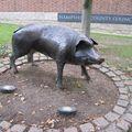 Winchester - Le sanglier devant la mairie