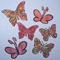 papillons rhodoïd001