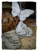 papillon et medicis