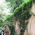 0561 - Un joli mur Aix 16 juin