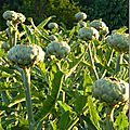 Windows-Live-Writer/Jardin_10232/DSCN0747_thumb