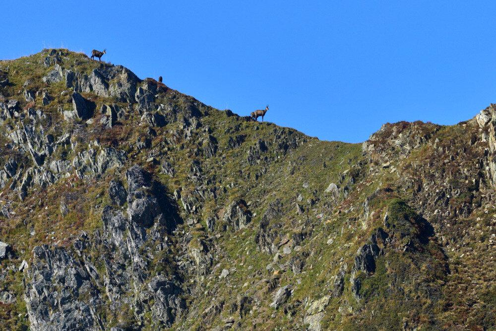 Plus près des cieux: Le cairn au loungta et les chamois