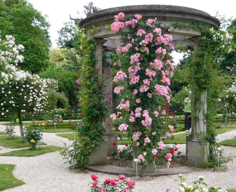Roseraie du Val de Marne