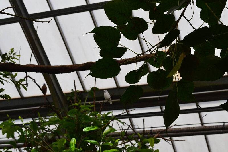 zooparc de beauval (24)