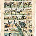 Planche animaux domestiques vintage