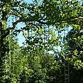 Dans les arbres, des journées entières
