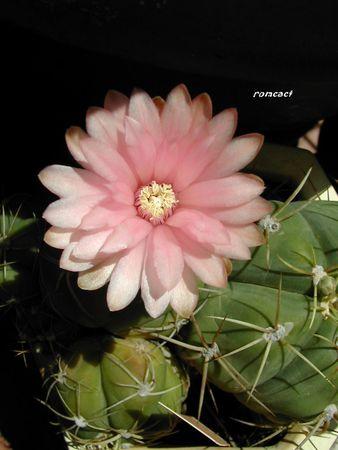 cactus_282