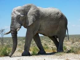 """Résultat de recherche d'images pour """"images éléphant"""""""