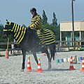 Jeux équestres manchots 2013 (221)