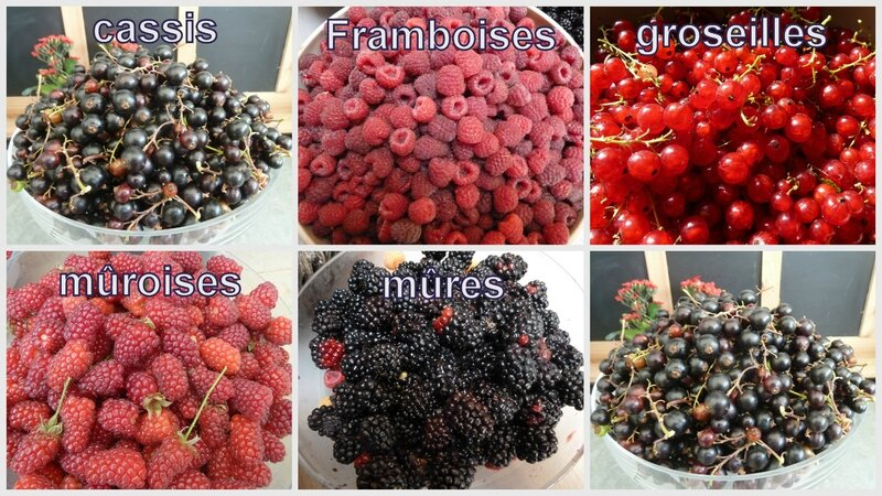 24-fruits rouges