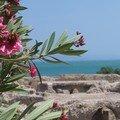 Carthage - Thermes d'Antonin - Tunisie