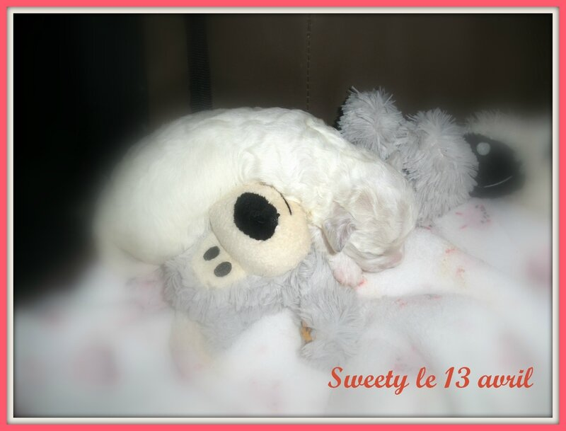 sweety 13 avril
