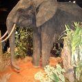 au pays de l'éléphant