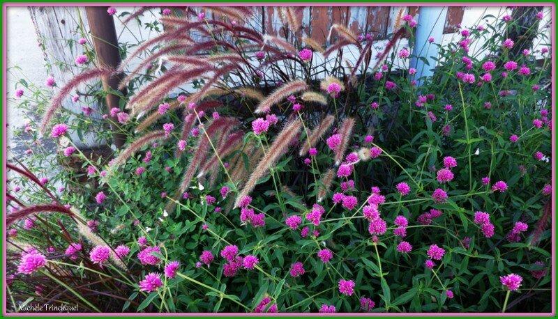 Fleurs roses 080915