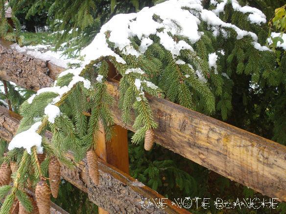 neige_pomme_de_pin