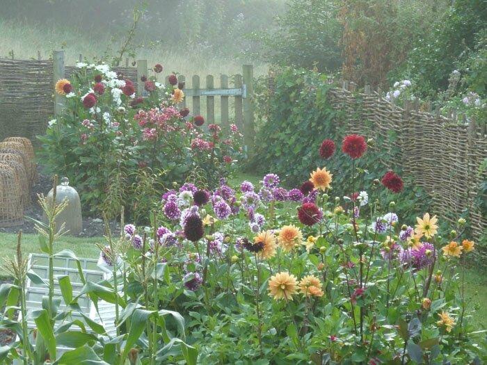 Fleurs De Jardin Automne