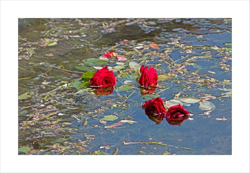 ville roses rouge riviere 160516