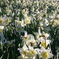 Pranvera e parakohshme edhe në francë