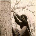 Bacaze en grimpe aux arbres
