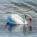Balade au Lac 040218