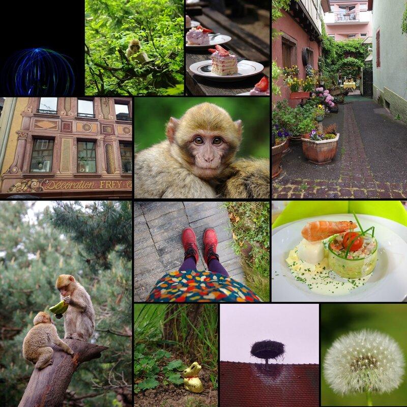 Alsace. La Montagne des singes. Kintzheim