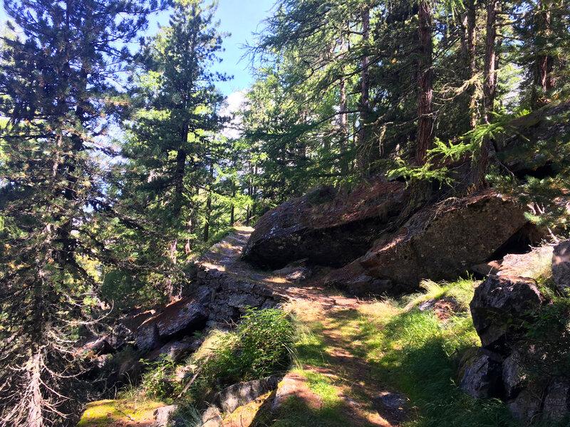 dans les forêts valaisannes