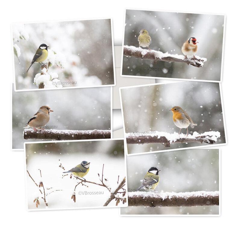 carte-hiver-oiseau08