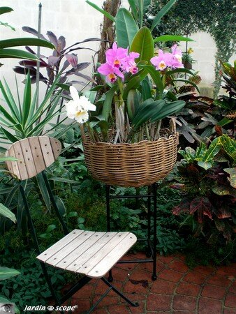 Orchidees_en_panier