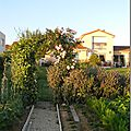 Windows-Live-Writer/Jardin_10232/DSCN0744_thumb