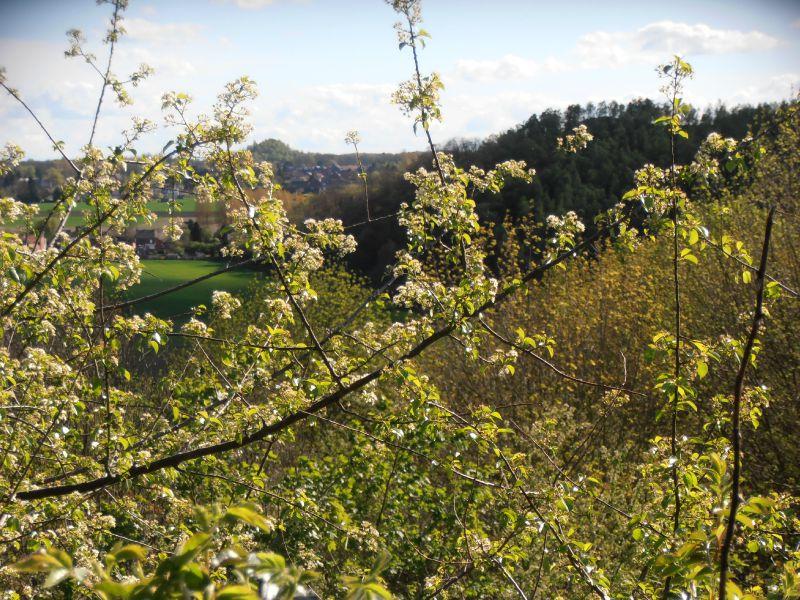 69 - Terril du 6 - Hornu-Wasmes - panorama