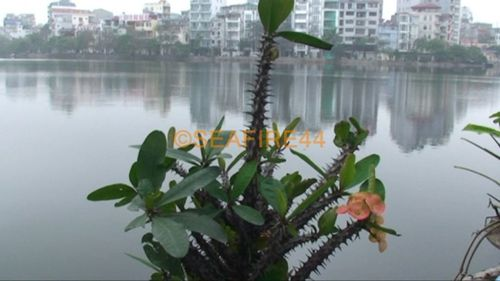 hanoi_lac bay mau_01