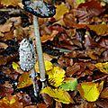 Faire différents spores (9)