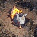 mon rhinocéros dans les flammes