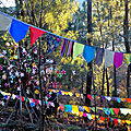 forêt enchantée yurtao