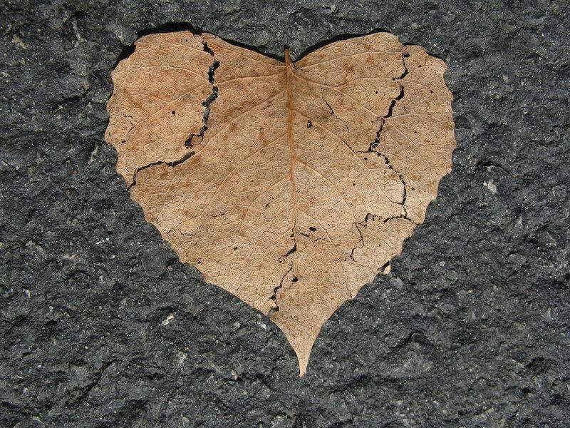 heart-742712_1920