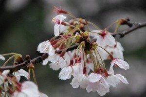 JapanDSC_3249_