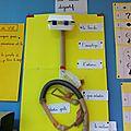 Maquette du tube digestif (cm1)